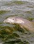 marine conservation dolphin